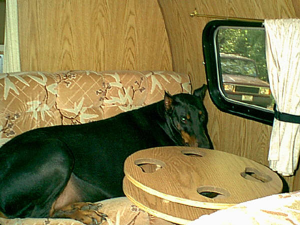 here's a pic of jake and his couch,in the Coachman, this dog has to have the window open a crack,, and a chew bone when he travels....lol...